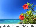 沖繩藍色海和藍天和紅色木槿 26477060