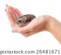 Mouse in hand 26481671