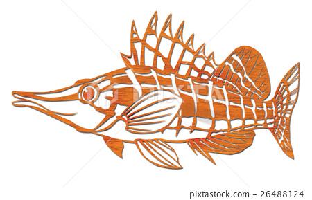 尖吻䱵 魚 觀賞魚類 26488124