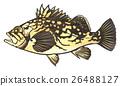 魚圖 26488127