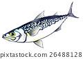 魚圖 26488128
