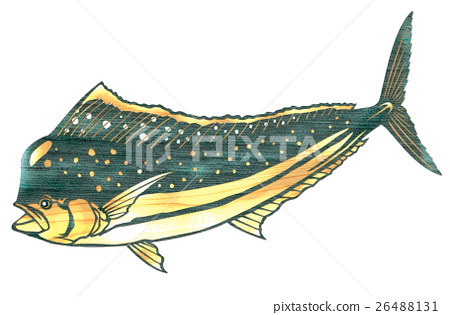 물고기 일러스트 26488131