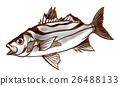魚圖 26488133
