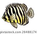 魚圖 26488174