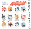 Poultry farming. Goose breeds icon set 26490591
