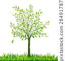 樹木 樹 春天 26491787
