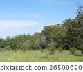 แอฟริกา,ธรรมชาติ,ทัศนียภาพ 26500690