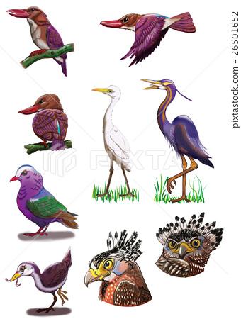 西表島和石垣島的鳥圖 26501652
