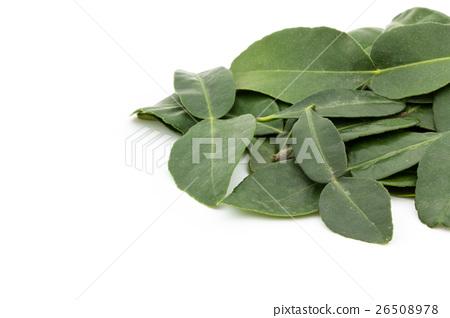 非洲青檸葉:非洲黑人石灰葉 26508978