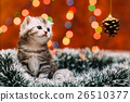Cute scottish kitten with Christmas background 26510377