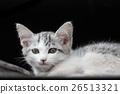고양이 26513321