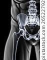 pelvis, anatomy, skeleton 26522792