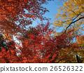 Autumn colors 26526322