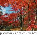 Autumn colors. Momiji.  26526325