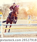 Young female rider on bay horse jump over hurdle 26527918