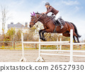 Young female rider on bay horse jump over hurdle 26527930