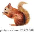 watercolor sketch: Squirrel on a white background 26528000