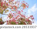 晚秋楓葉 26533937