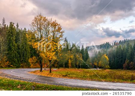 road throug autumn forest 26535790
