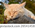 낮잠중인 고양이 26541458