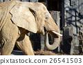 코끼리의 개요 26541503