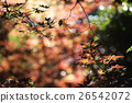 maples leafs background 26542072