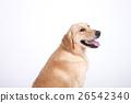 Animal companion and me  26542340
