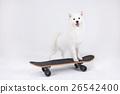 Animal companion and me  26542400