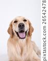 Animal companion and me  26542478