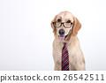 Animal companion and me  26542511