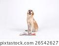 Animal companion and me  26542627
