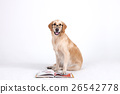 Animal companion and me  26542778