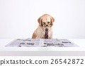 Animal companion and me  26542872