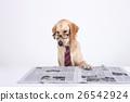 Animal companion and me  26542924