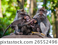Monkey in forest park in Ubud - Bali Indonesia 26552496