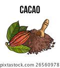 cacao powder vector 26560978