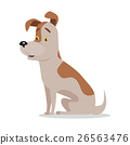 Jack Russell Terrier Dog Breed Isolated on White 26563476