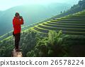เวียดนาม,ข้าว,พื้นหญ้า 26578224
