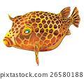 魚圖 26580188
