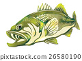 black bass, fish, fishes 26580190