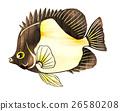 魚圖 26580208
