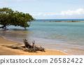 馬達加斯加 海灘 自然 26582422