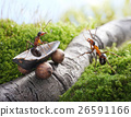 Animal stock images 26591166