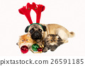 Animal stock images 26591185