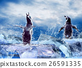 Animal stock images 26591335