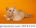 Animal stock images 26591345