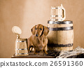 Animal stock images 26591360