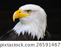 Animal stock images 26591467