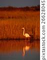 wildlife, nature, beautiful 26628045
