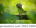 small, owl, nature 26631886